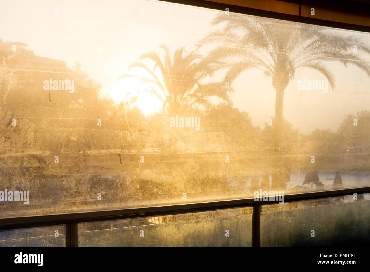 palm trees in early morning sunshine through condensation covered plastic sheeting - Stock Image