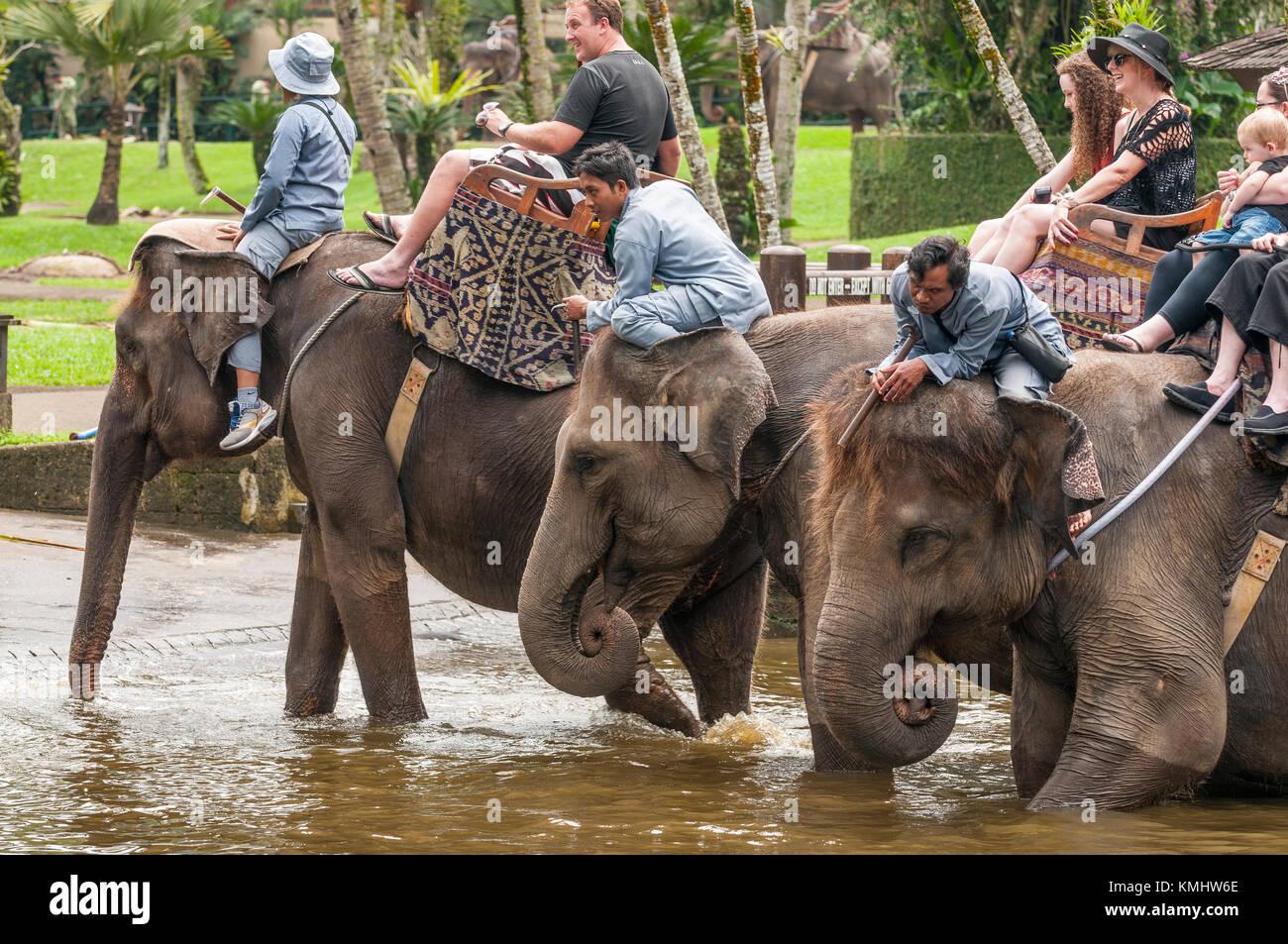 Tourists and handlers riding rescued Sumatran elephants at the Elephant Safari Park at Taro, Bali, Indonesia - Stock Image