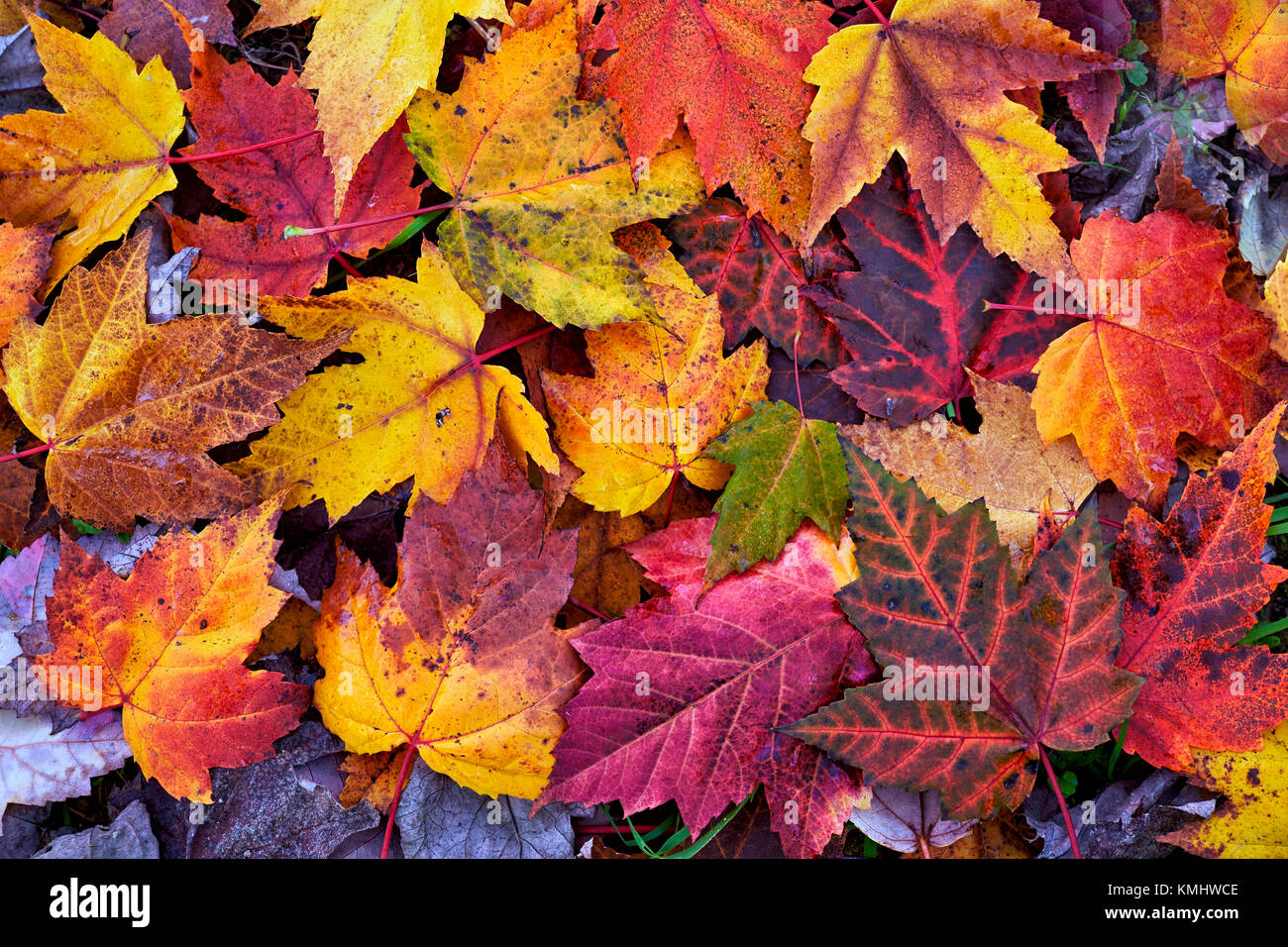 Autumn leaves.Colorful fall tones: yellow, ocher, brown, red, orange,green. - Stock Image