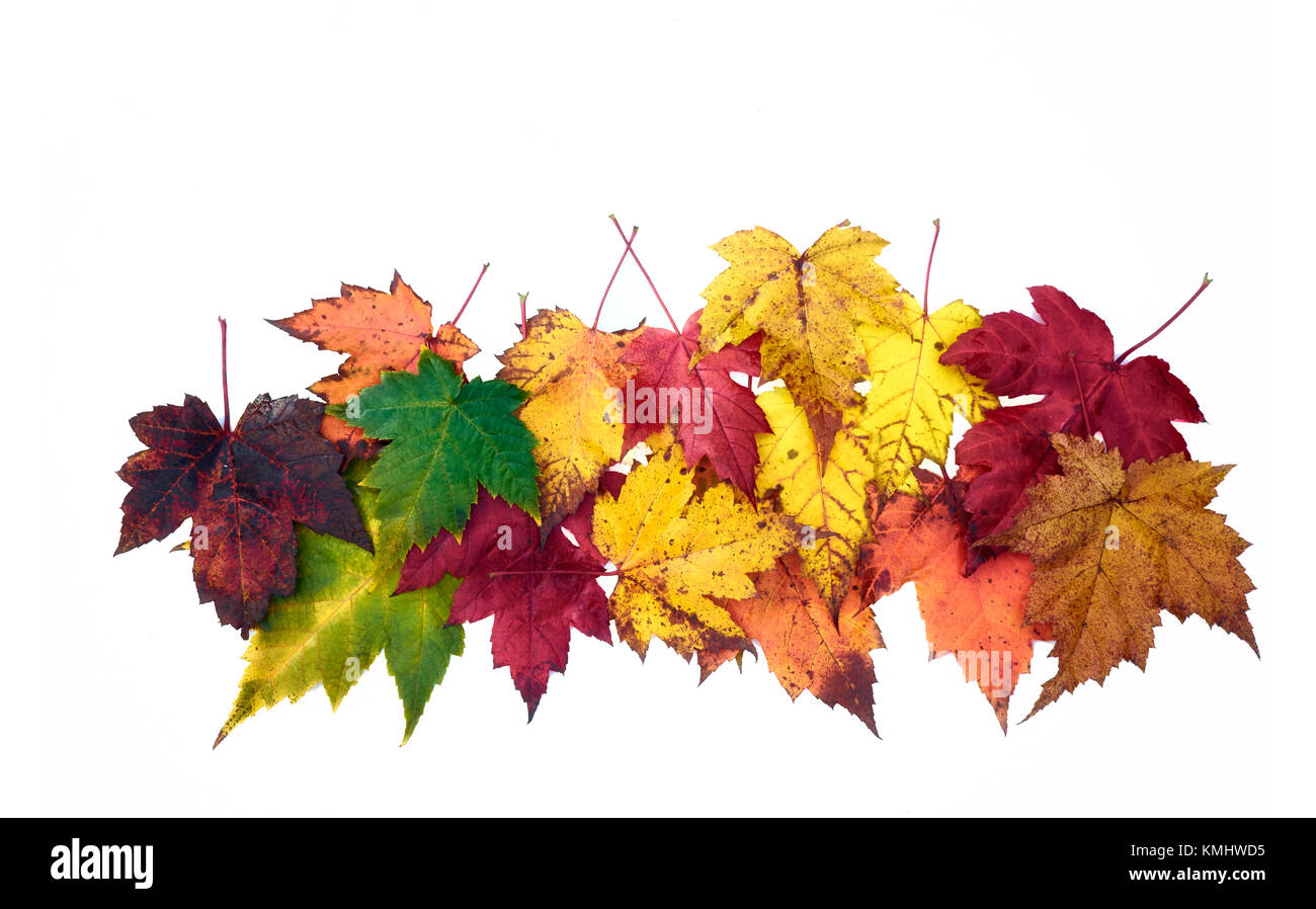 Autumn leaves.Colorful fall tones: yellow, ocher, brown, red, orange,green. Stock Photo