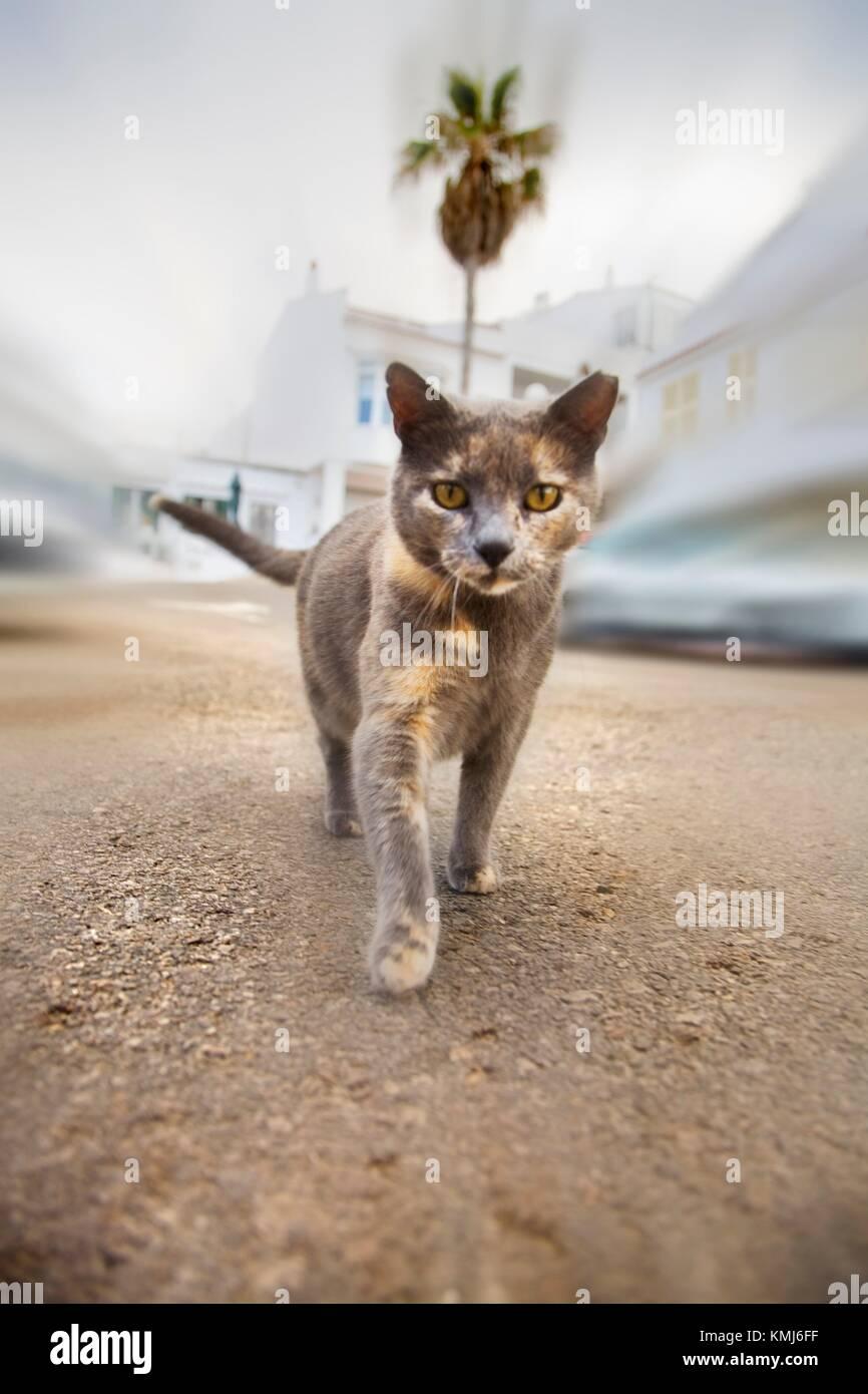 Cat in the street. Es Grau.Minorca. Balearic Islands. Spain. - Stock Image