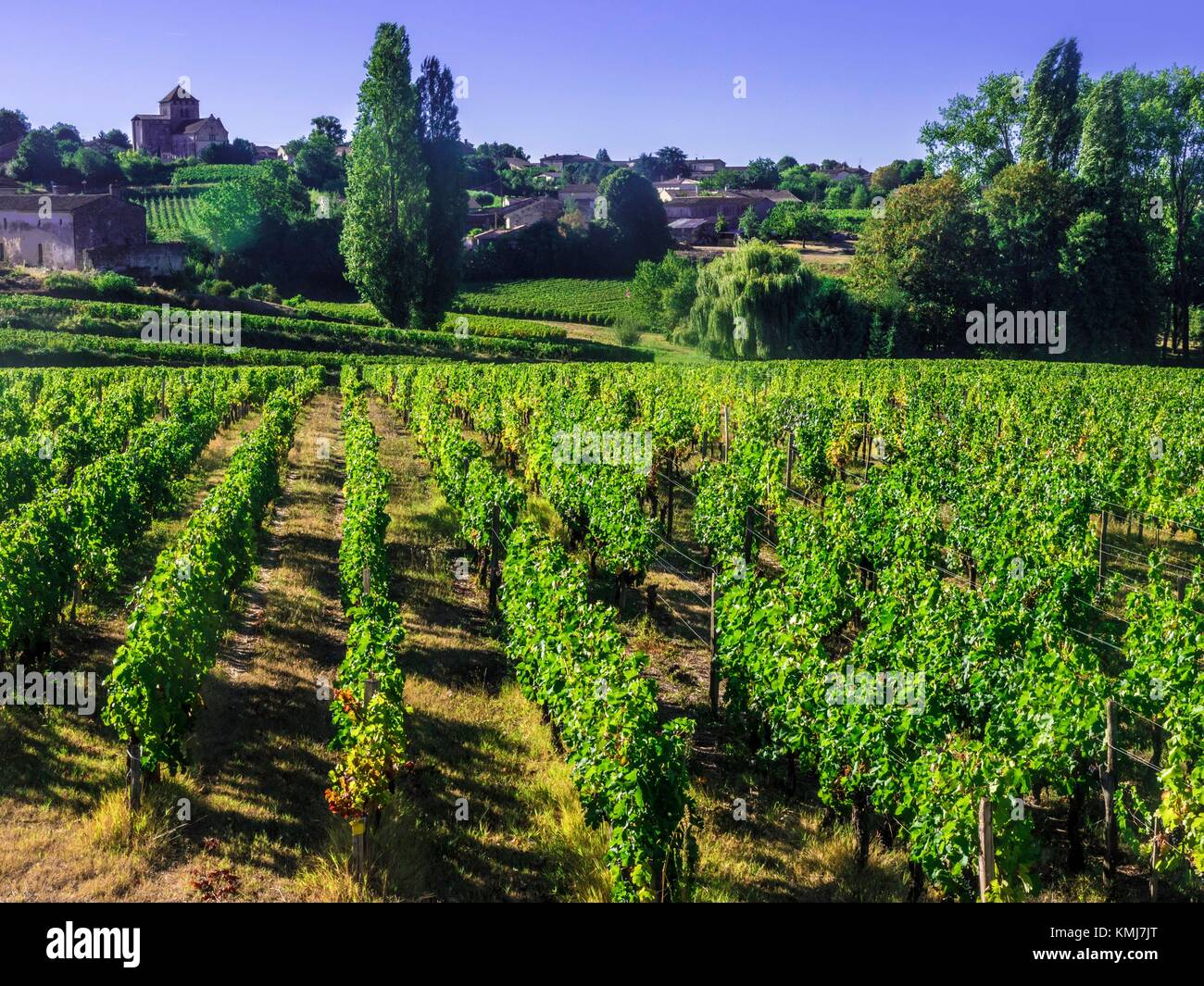 France, Aquitaine, Gironde. ''Montagne Saint Emilion'', one of the famed Bordeaux wunes district. - Stock Image