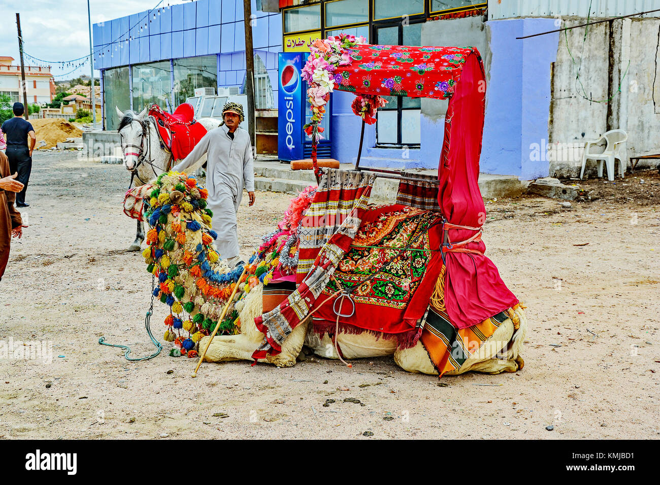 Shepherd and camels for tourist rides in Taif, Saudi Arabia. - Stock Image