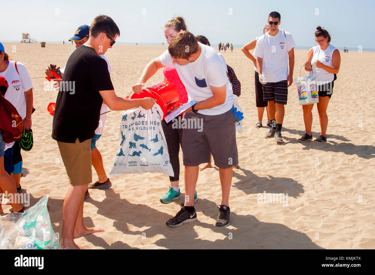Young adult volunteers fill trash bags at a weekend cleanup in Huntington Beach, CA. - Stock Image