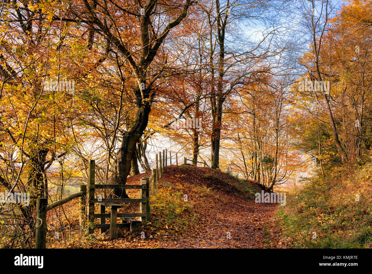 Autumn at Pulpit Wood, Chilterns AONB, Buckinghamshire, England, UK - Stock Image