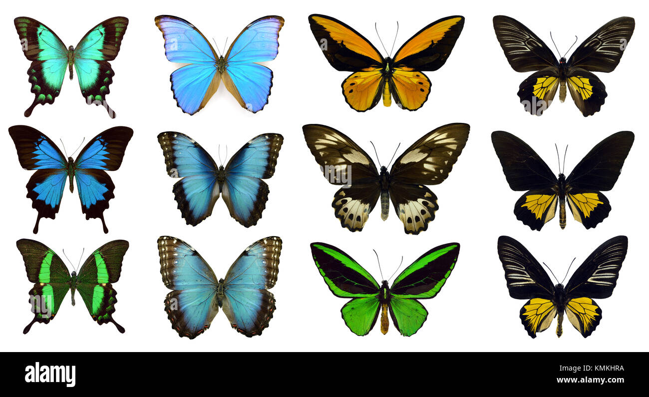 Collection of beautiful exotic colorful butterflies isolated on white background - Stock Image