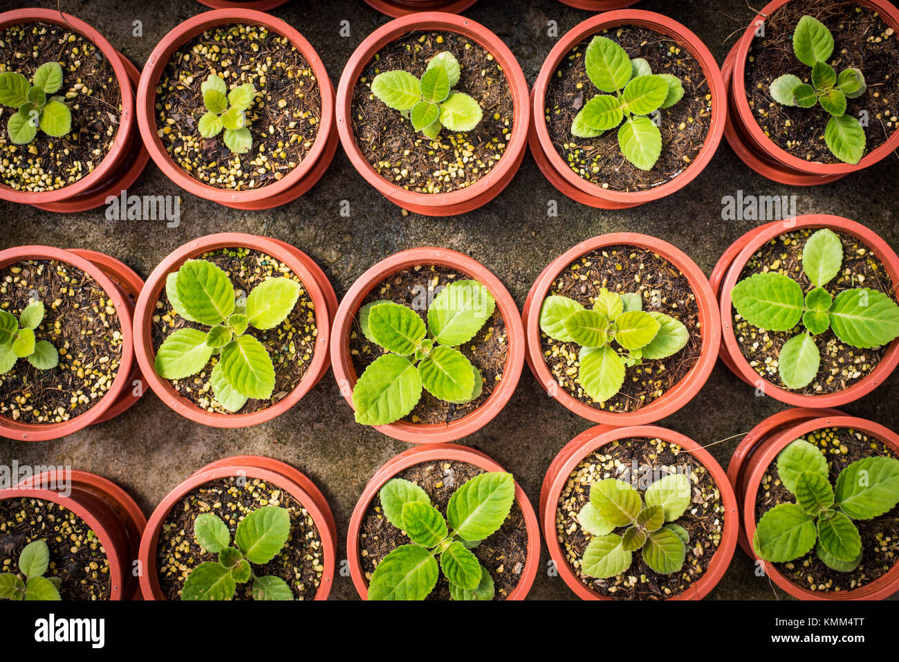 Potted seedlings growing in little brown pots arrange in top view for save the wolrd concept. - Stock Image