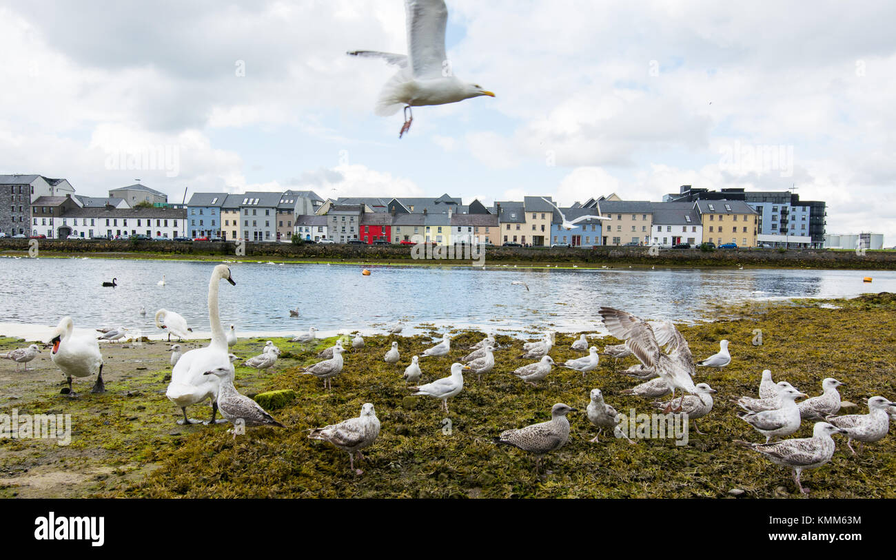 Landscapes of Ireland. Galway city and Corrib river - Stock Image