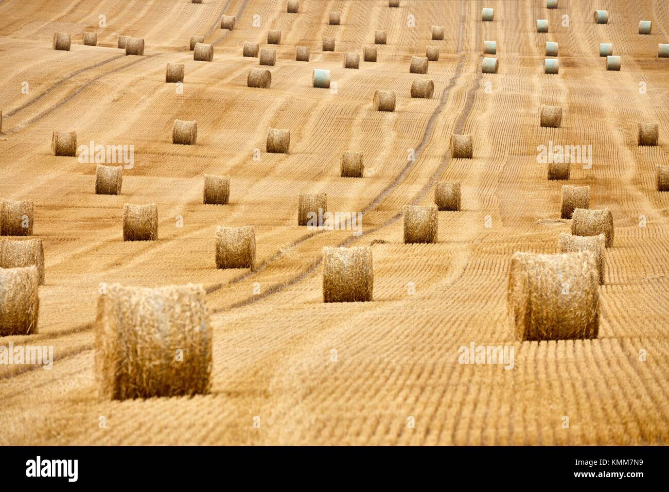 Field of cereal, bales of straw, stubble, near Auxerre, Yonne, Burgundy, Bourgogne, France, Europe - Stock Image