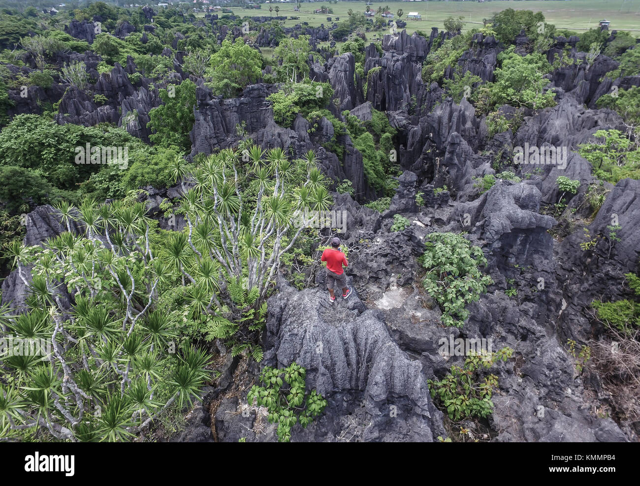 The forest of rock in Rammang-Rammang near Maros Makassar in South Sulawesi - Indonesia. - Stock Image