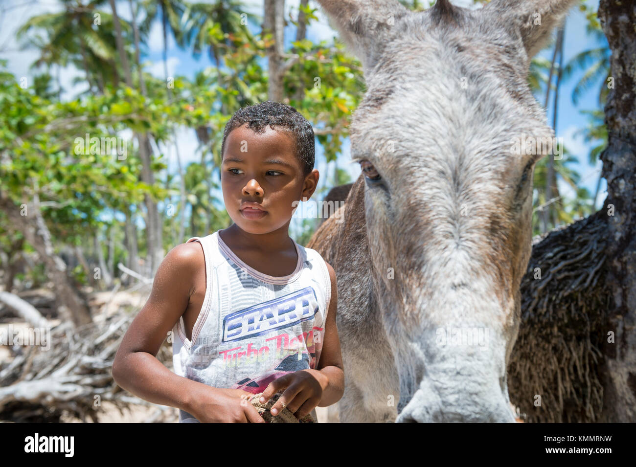 BAHIA, BRAZIL - MARCH 11, 2017: A mule stands with a young Brazilian boy on the palm-fringed shore of a Northeastern - Stock Image