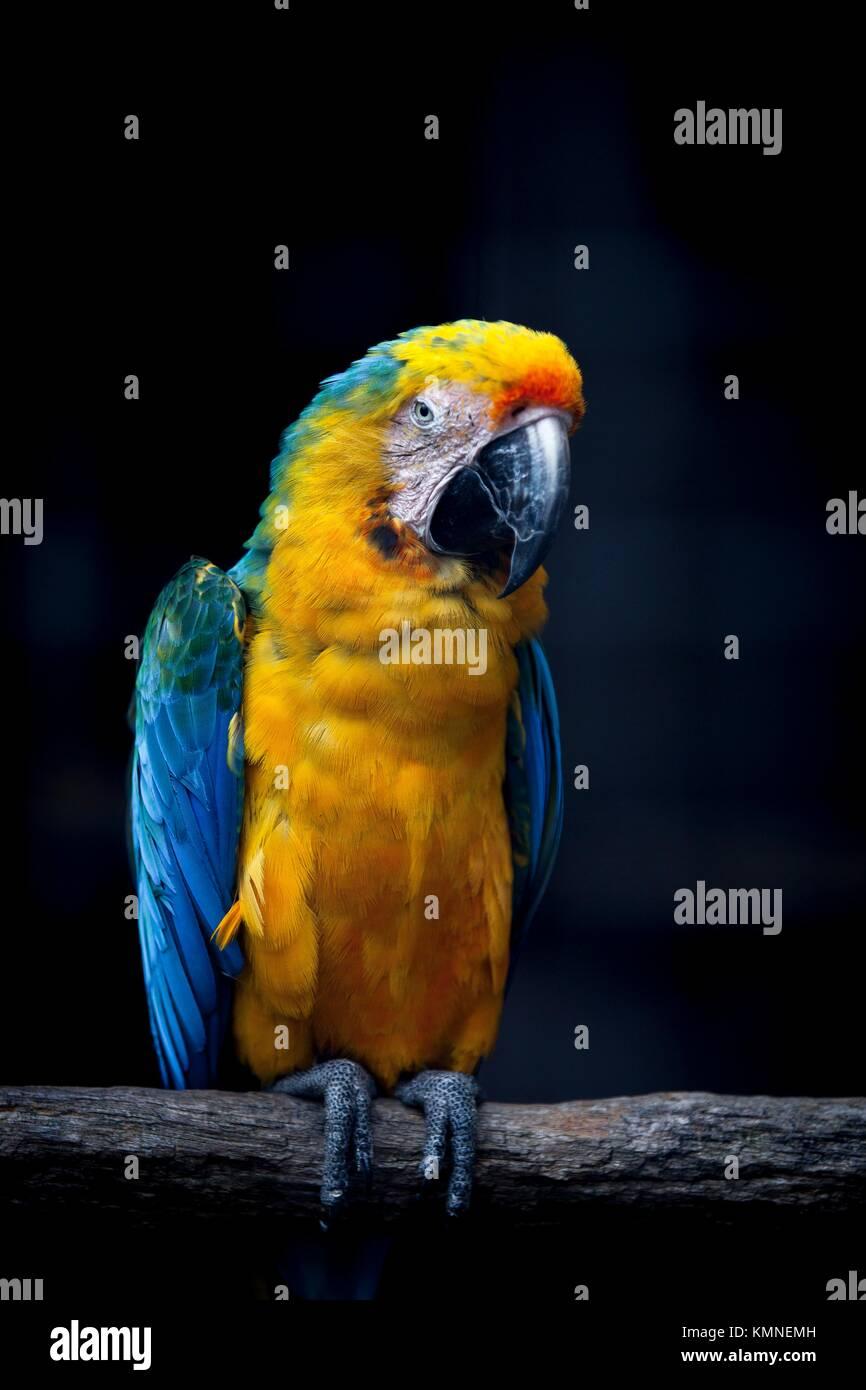 Parrot. Stock Photo