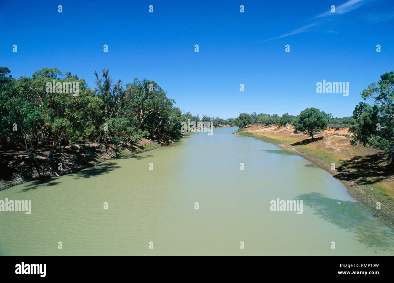 Environment disaster: blue-green algae infests Darling River. Australia - Stock Image