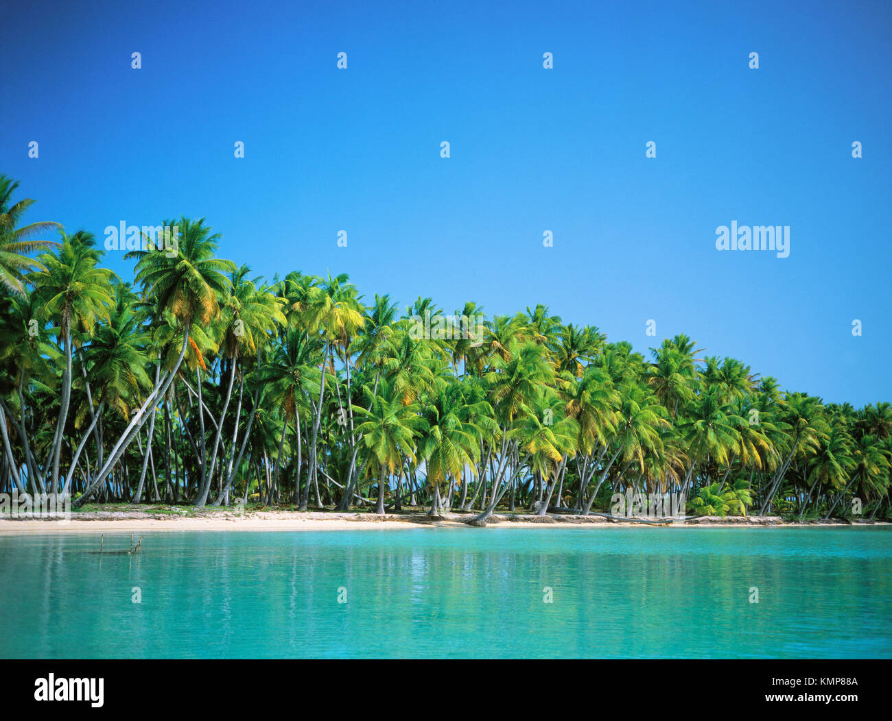 Palms above a remote beach on the lagoon. Takapoto atoll. Tuamotu archipelago. French Polynesia - Stock Image