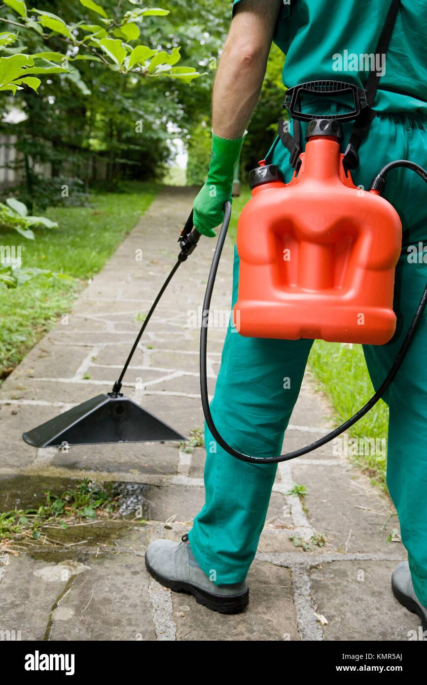 Gardener applying herbicide with bell sprayer - Stock Image