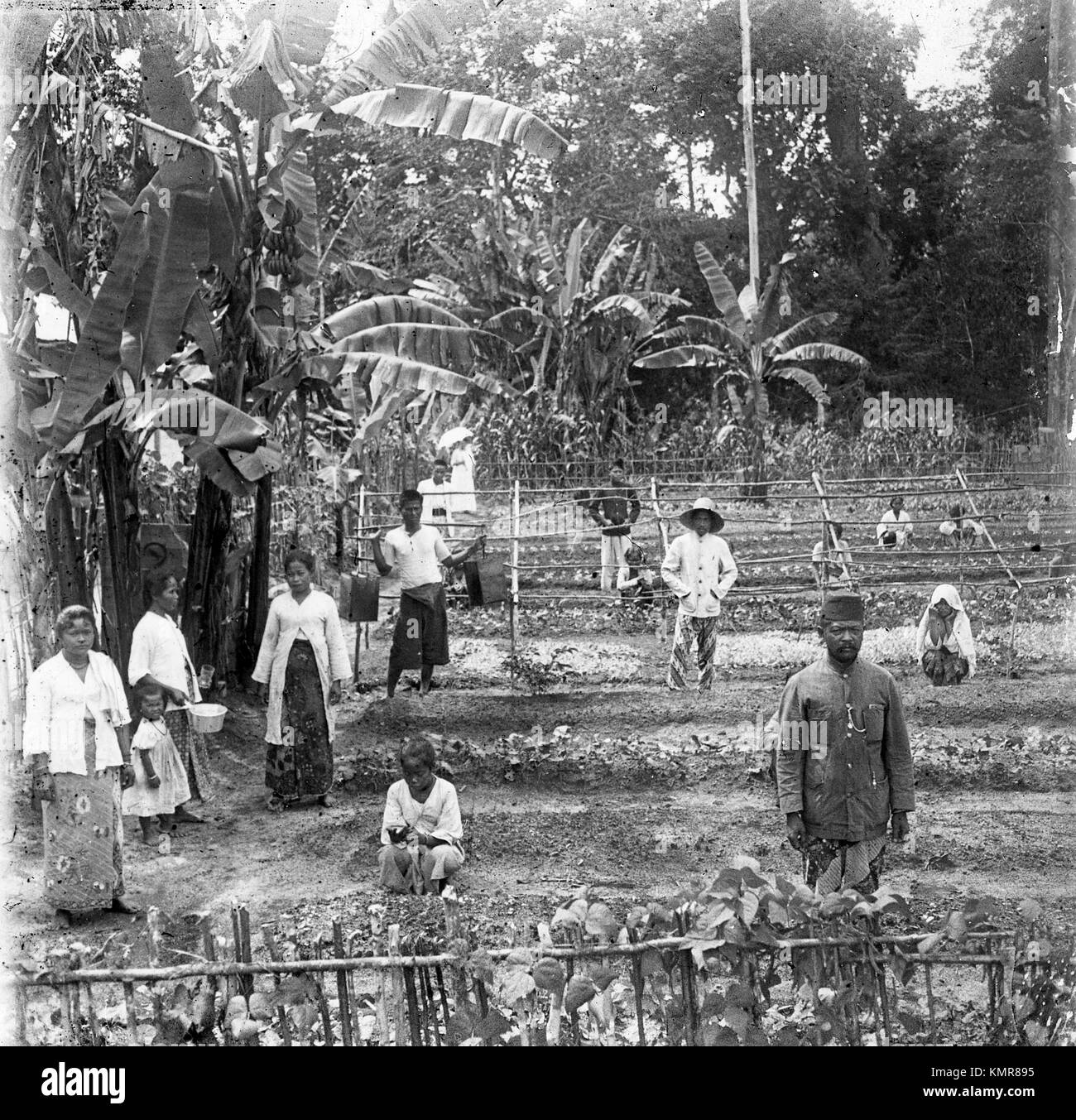 Plantation workers farming in Java Indonesia during Dutch Colonial Period of the Dutch East India Company 1921 - Stock Image