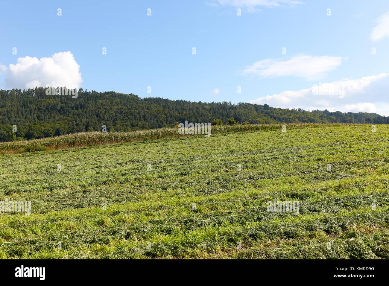 Agricultural area. The green field where the grass mown is seen and in the distance there are forest areas. Stock Photo