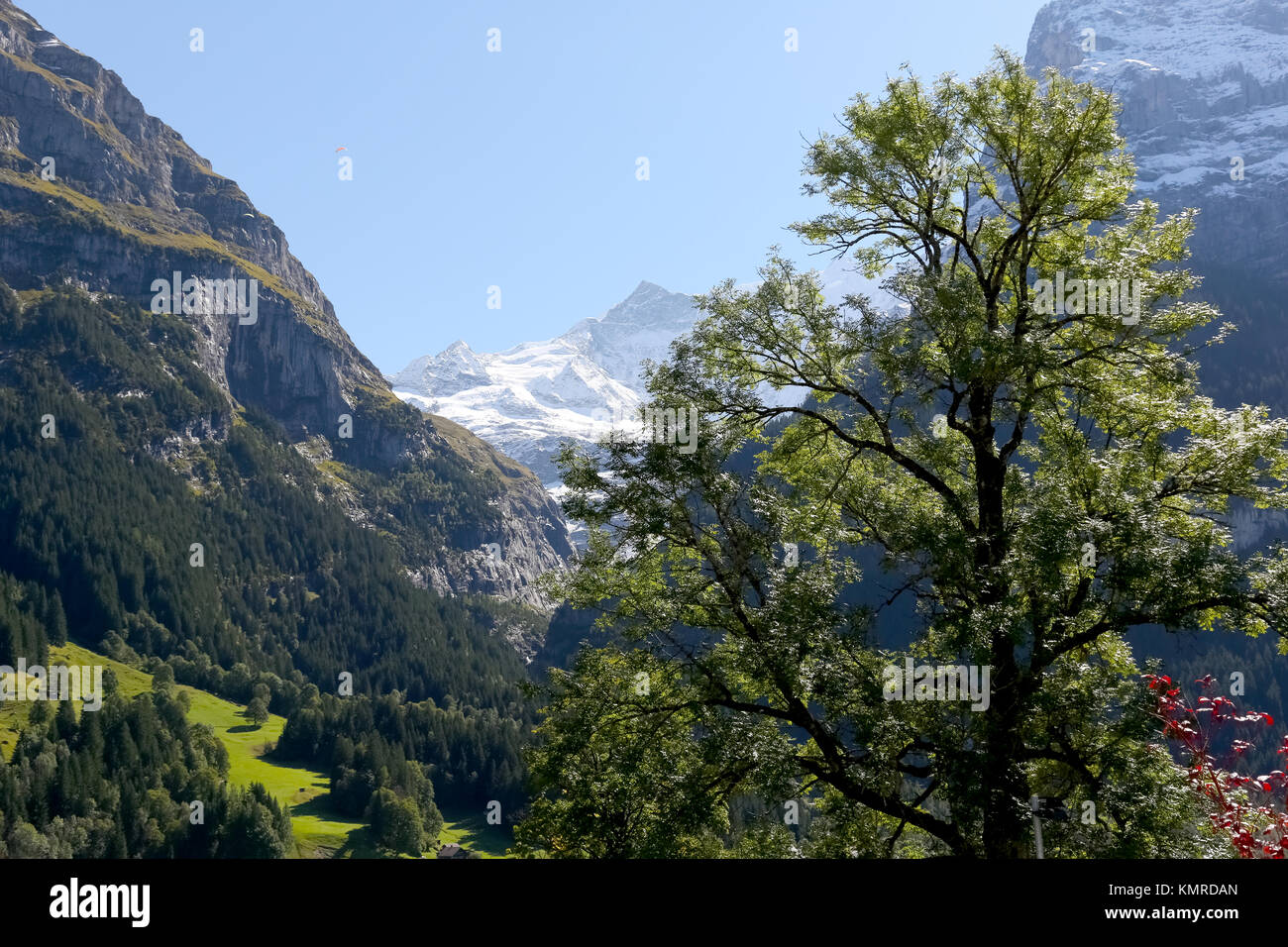 The Large Deciduous Tree Obscures The Alpine Landscape Of The Great Rocky Mountains And Below Are Visible Meadows And Forests