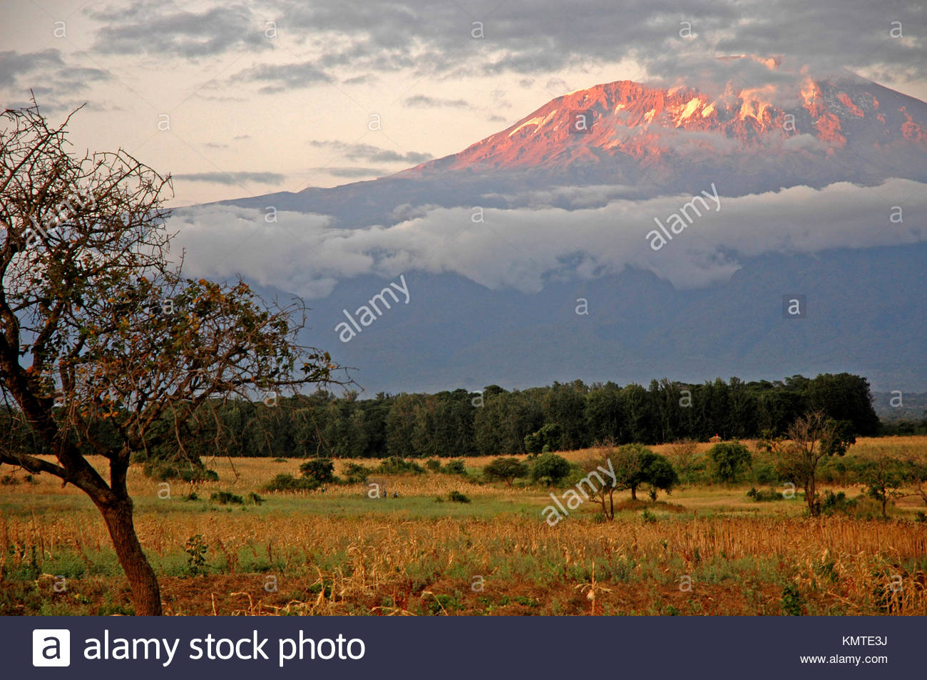 Sunset landscape with trees and Mount Kilimanjaro, Amboseli National Park, Kenya - Stock Image