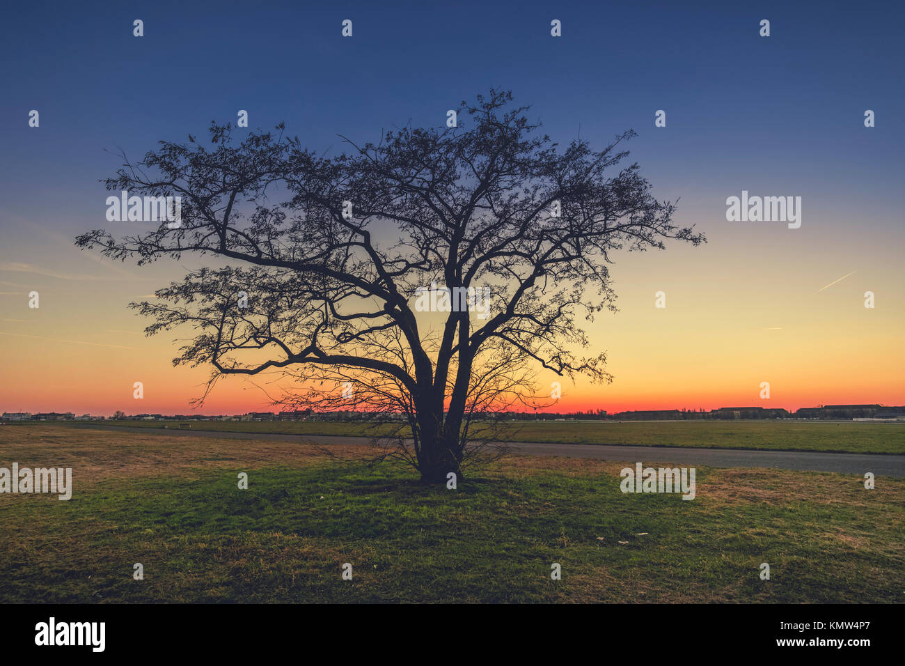 Solitary tree at dusk, in winter, at Tempelhof airport, Berlin. - Stock Image