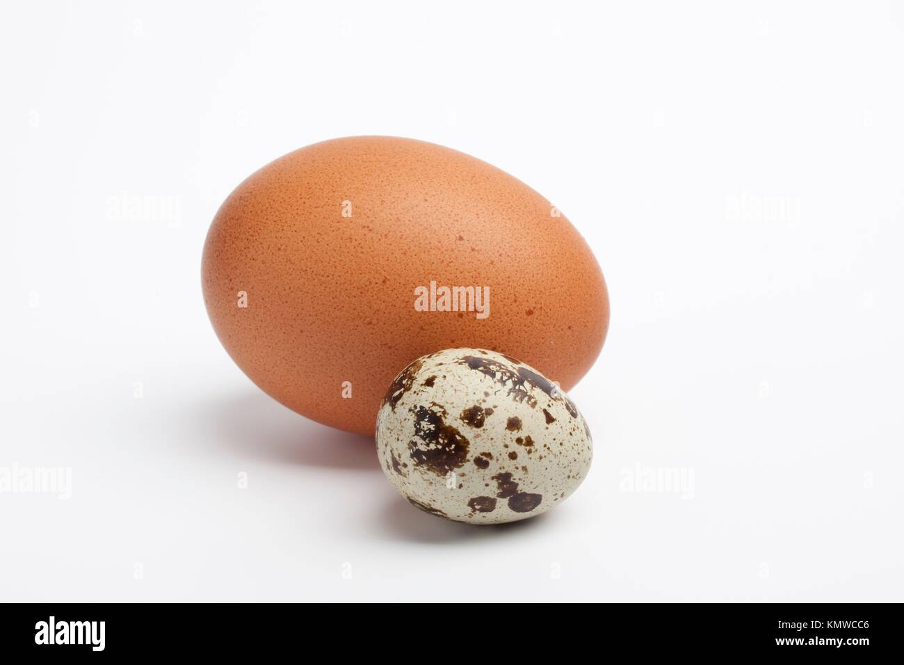 Quail egg with a chicken egg - Stock Image
