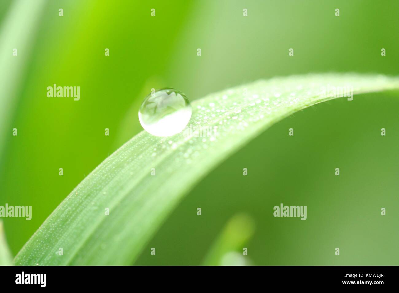Droplet in leaf - Stock Image