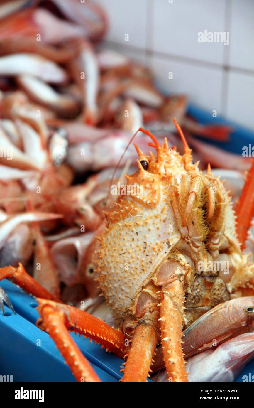 Seafood background with many mediterranean crabs on sale Javea harbor Spain - Stock Image