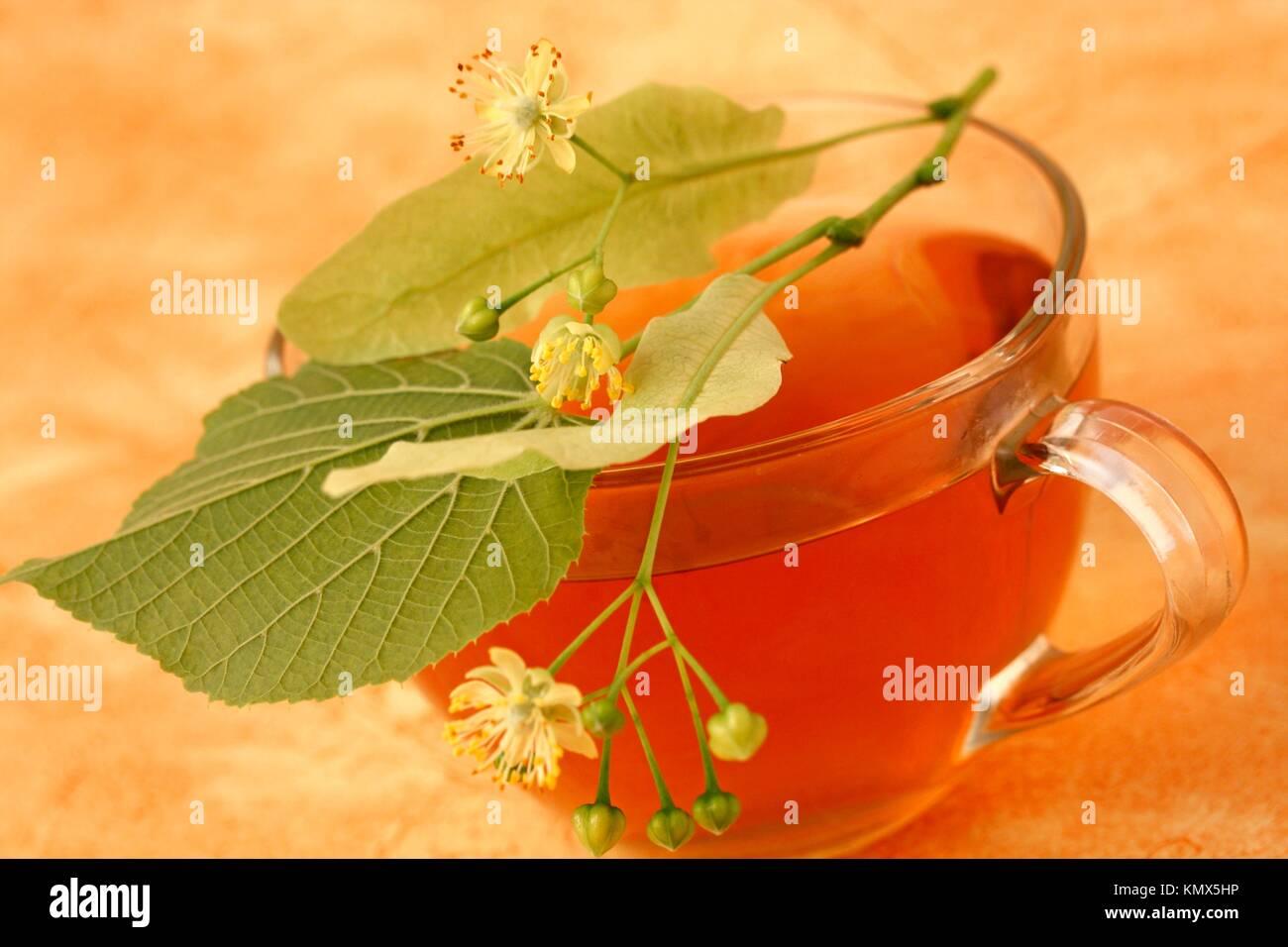 Linden tree infusion Tilia platiphyllos or Tilia cordata Stock Photo