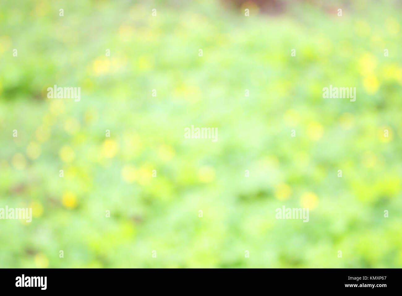 early spring. unfocused blurred yellow flowers background. Stock Photo