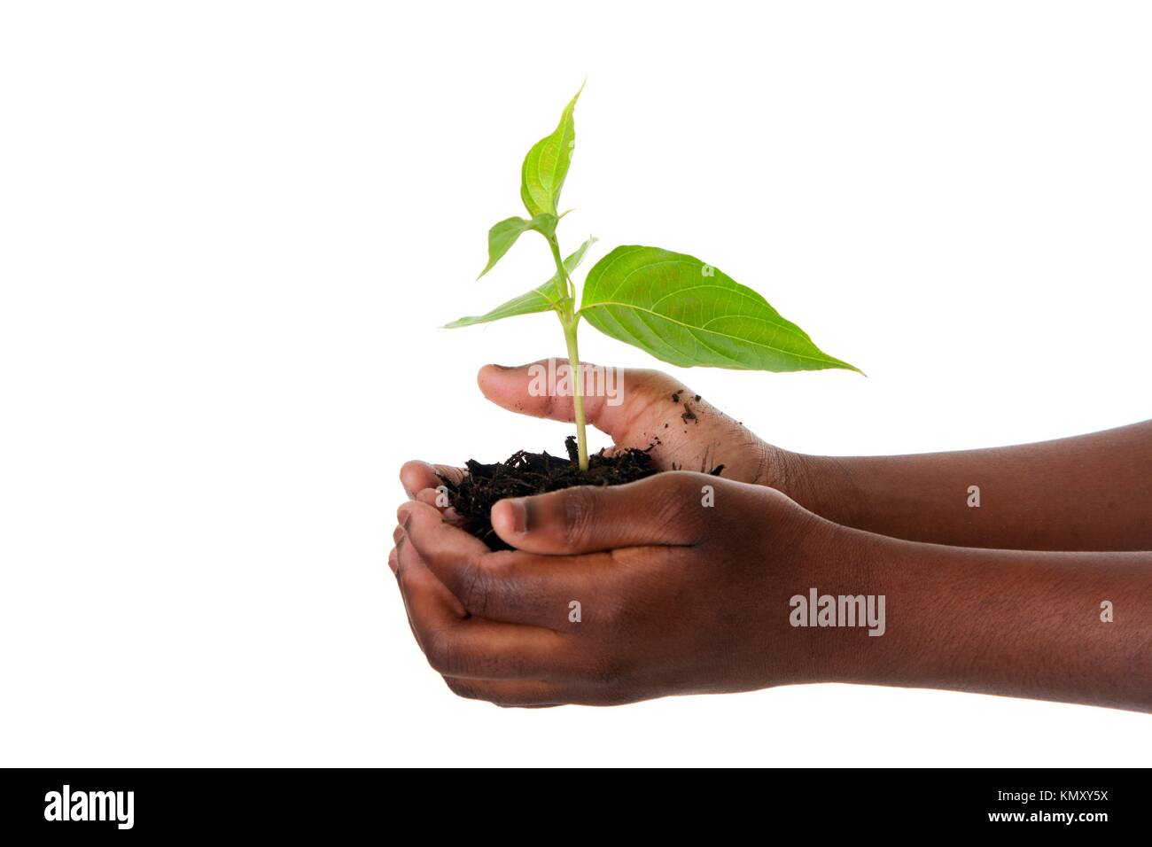 A young new plant growing from palm in hands of African child, isolated  Drought on Earth concept - Stock Image