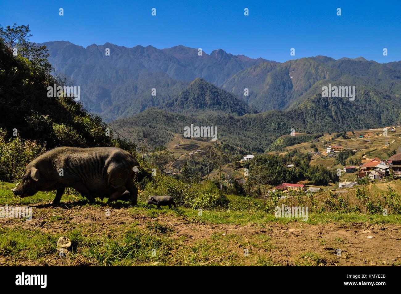 Sapa, Vietnam - Stock Image