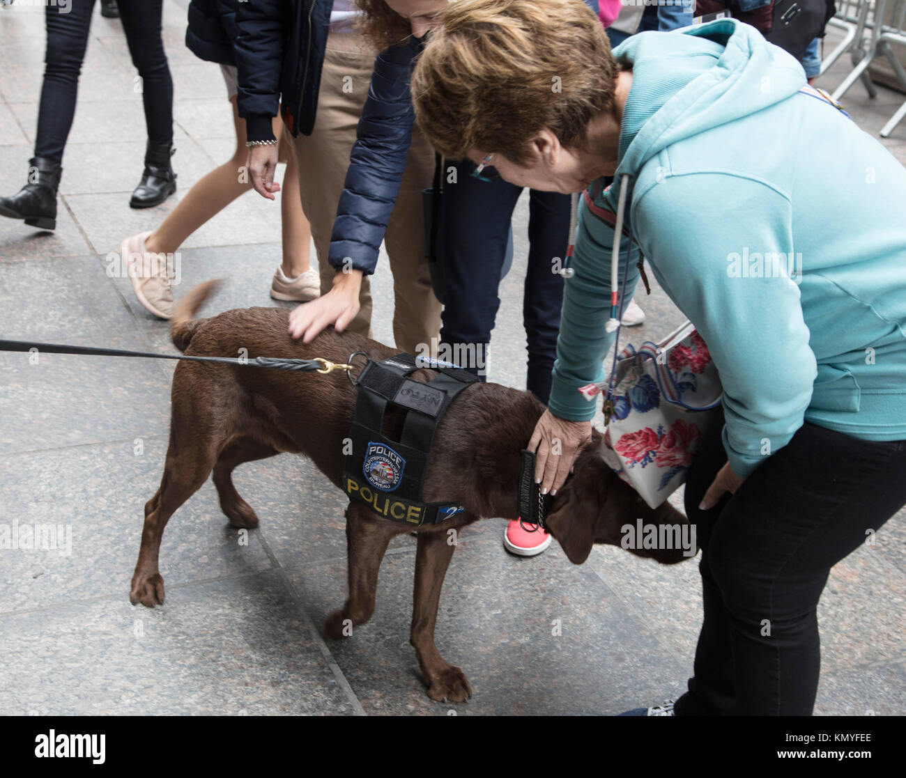 Bomb Sniffer Dog Stock Photos & Bomb Sniffer Dog Stock