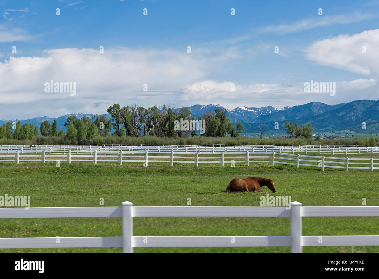 White wooden fence for the keeping of horses in Wyoming. Bay horse. - Stock Image