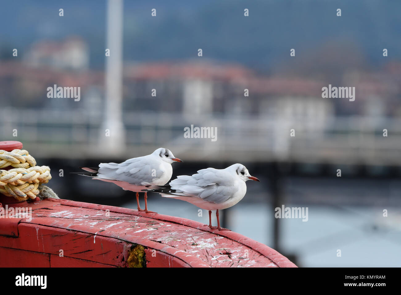 Close-up of black-headed gulls perched on a fishing boat - Stock Image