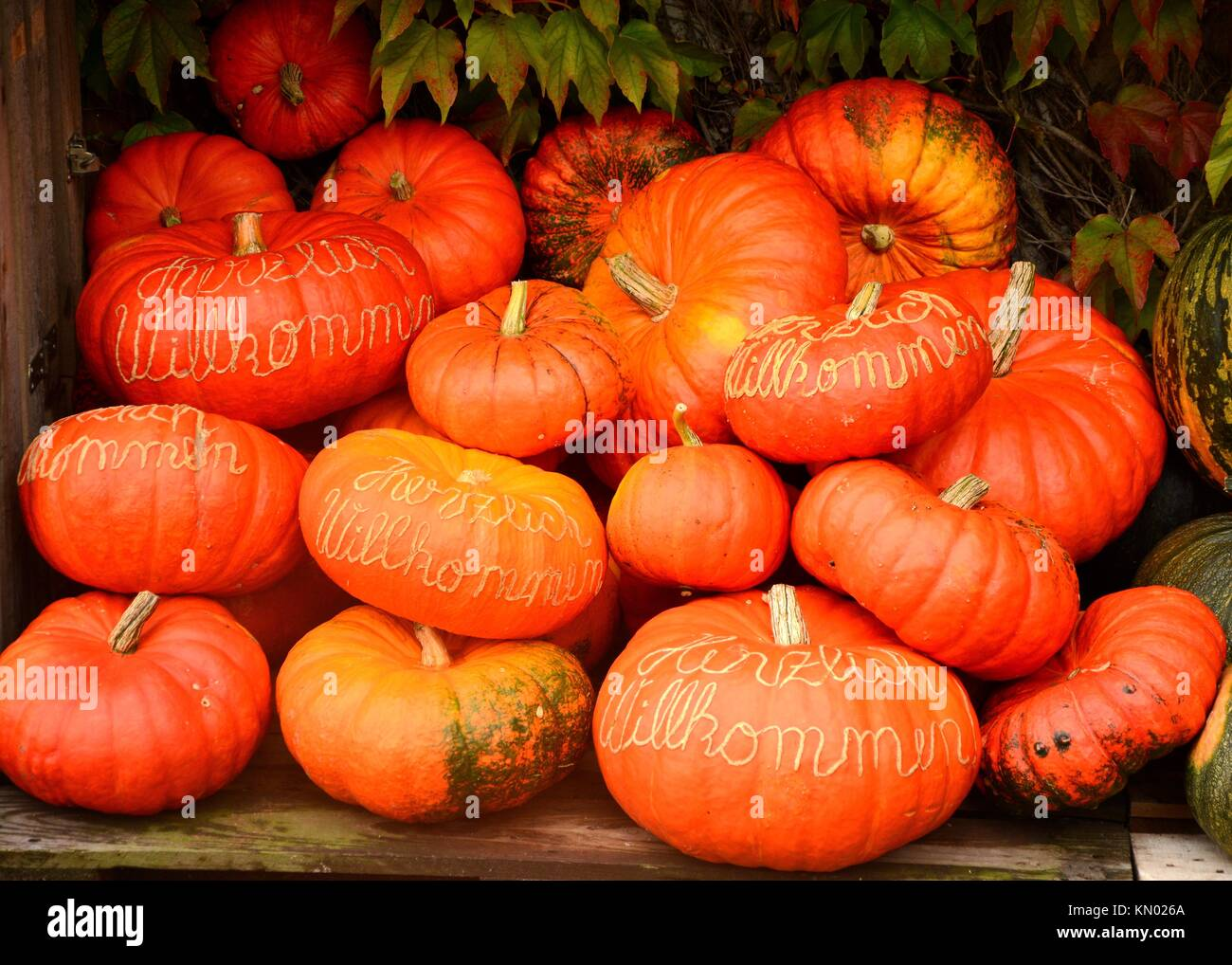 "Autumn pumkins with ""Herzlich Willkommen"" carving Stock Photo"