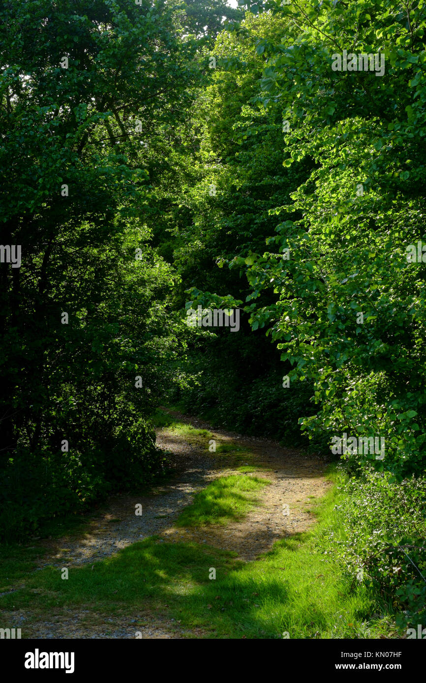 Path leading to a wood in the English countryside - Stock Image