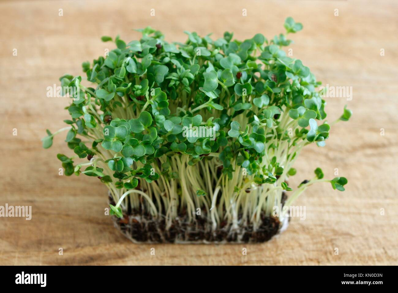 Water cress on a background - Stock Image