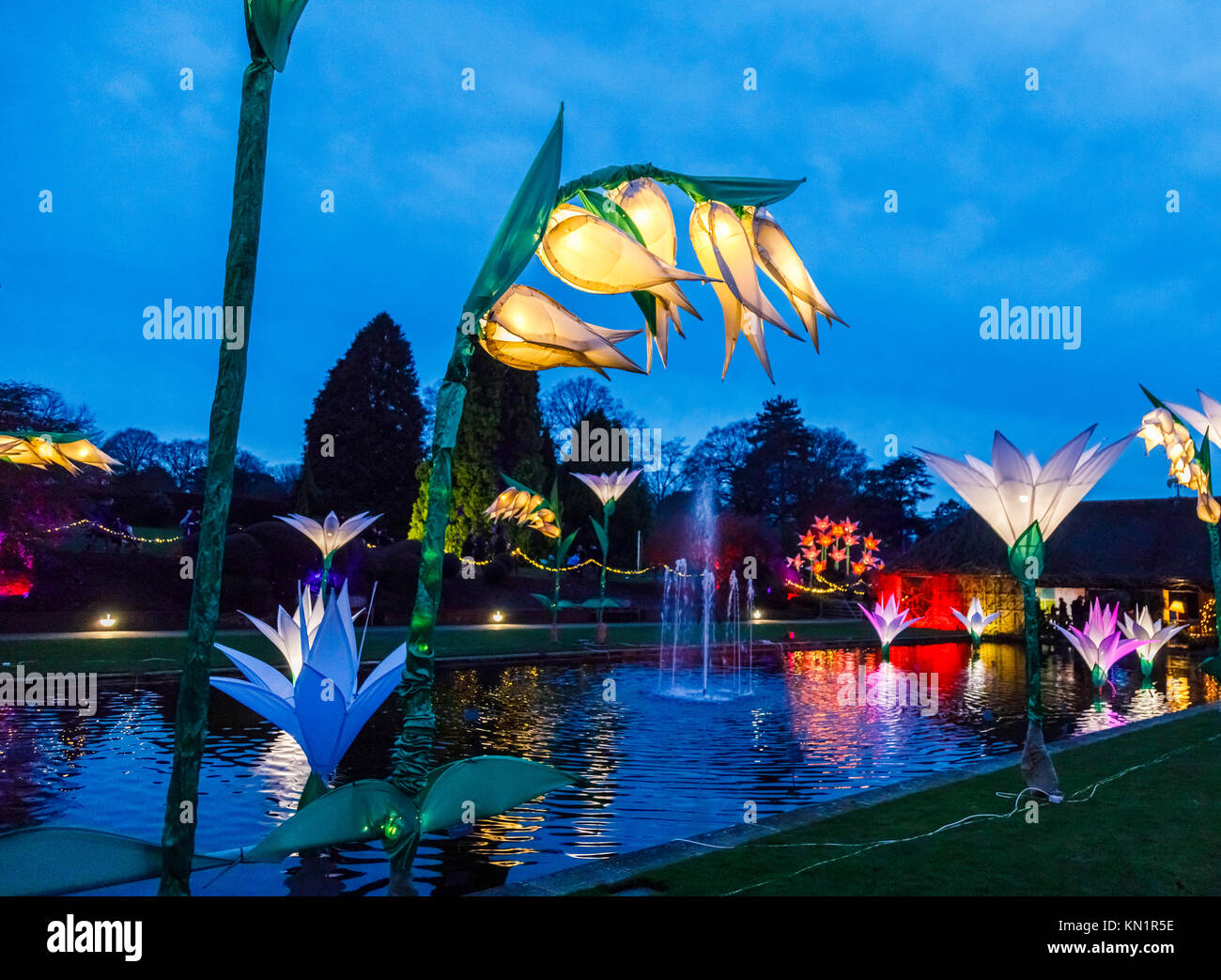 Wisley, Surrey, UK, 09th December 2017. Glowing, illuminated, fantastical giant flowers form a colourful display - Stock Image