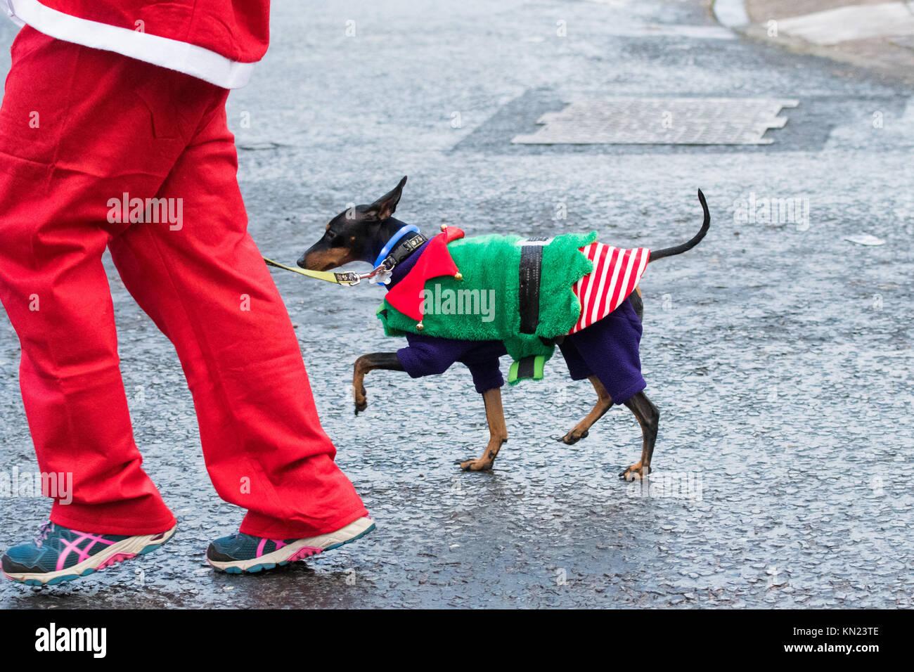 dog elf stock photos  u0026 dog elf stock images
