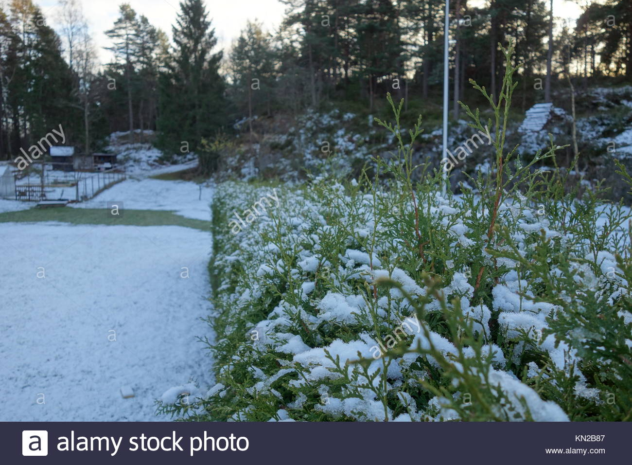 lawn and hedge covered in snow - Stock Image