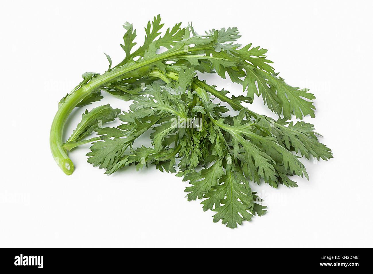 Twig of fresh green Shungiku on white background - Stock Image