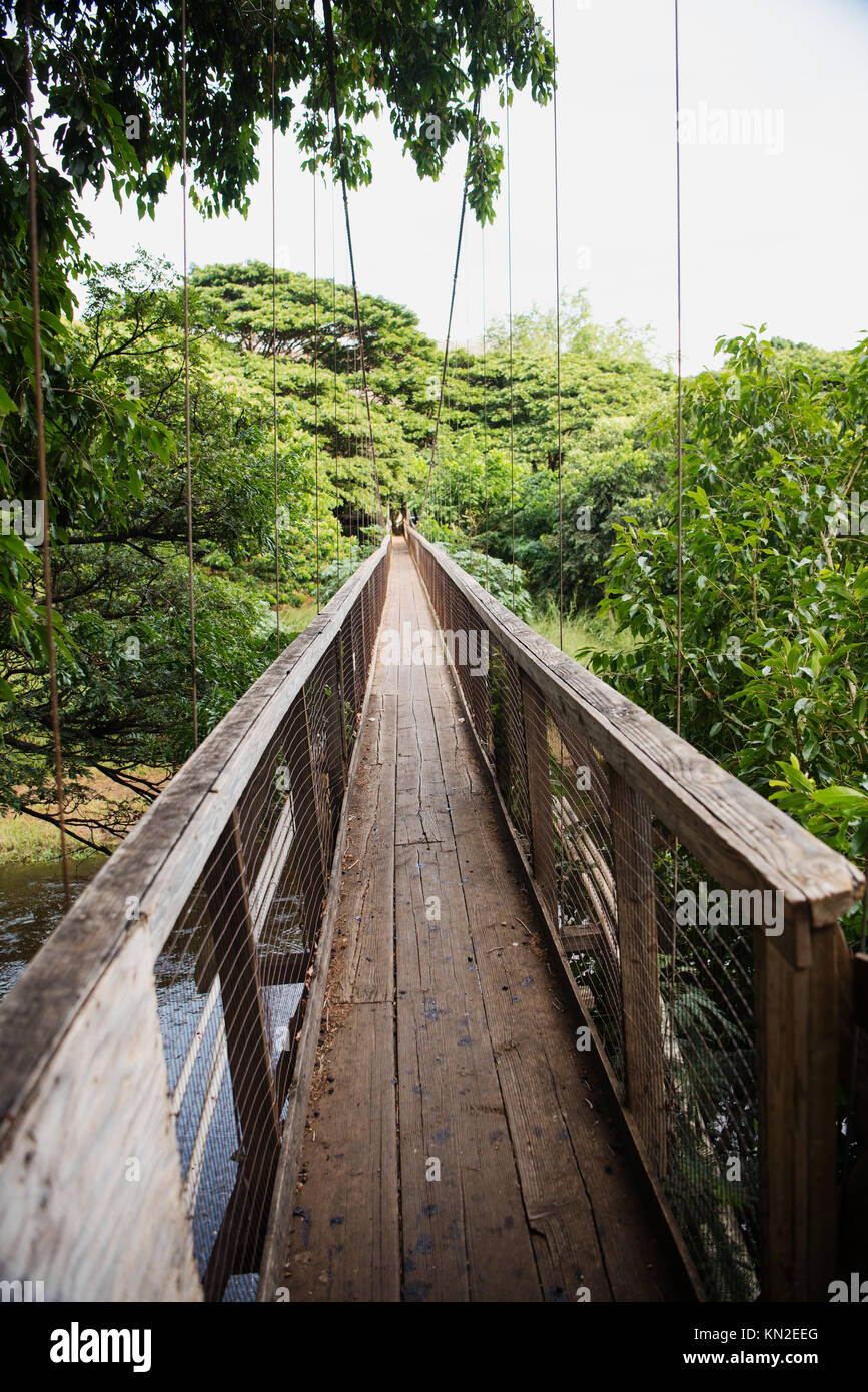 Swing bridge at the Menehune Ditch on Kauai Island, Hawaii - Stock Image