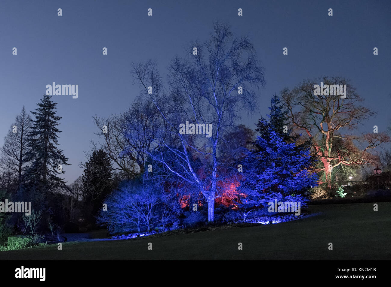 RHS Gardens Harlow Carr - Glow Winter Illuminations - Stock Image