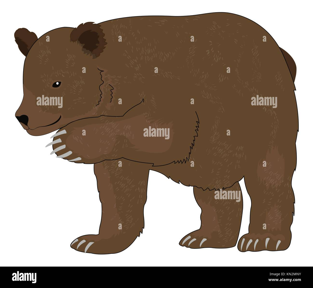 Bear or Ursus arctos, Brown, vector illustration Stock Photo