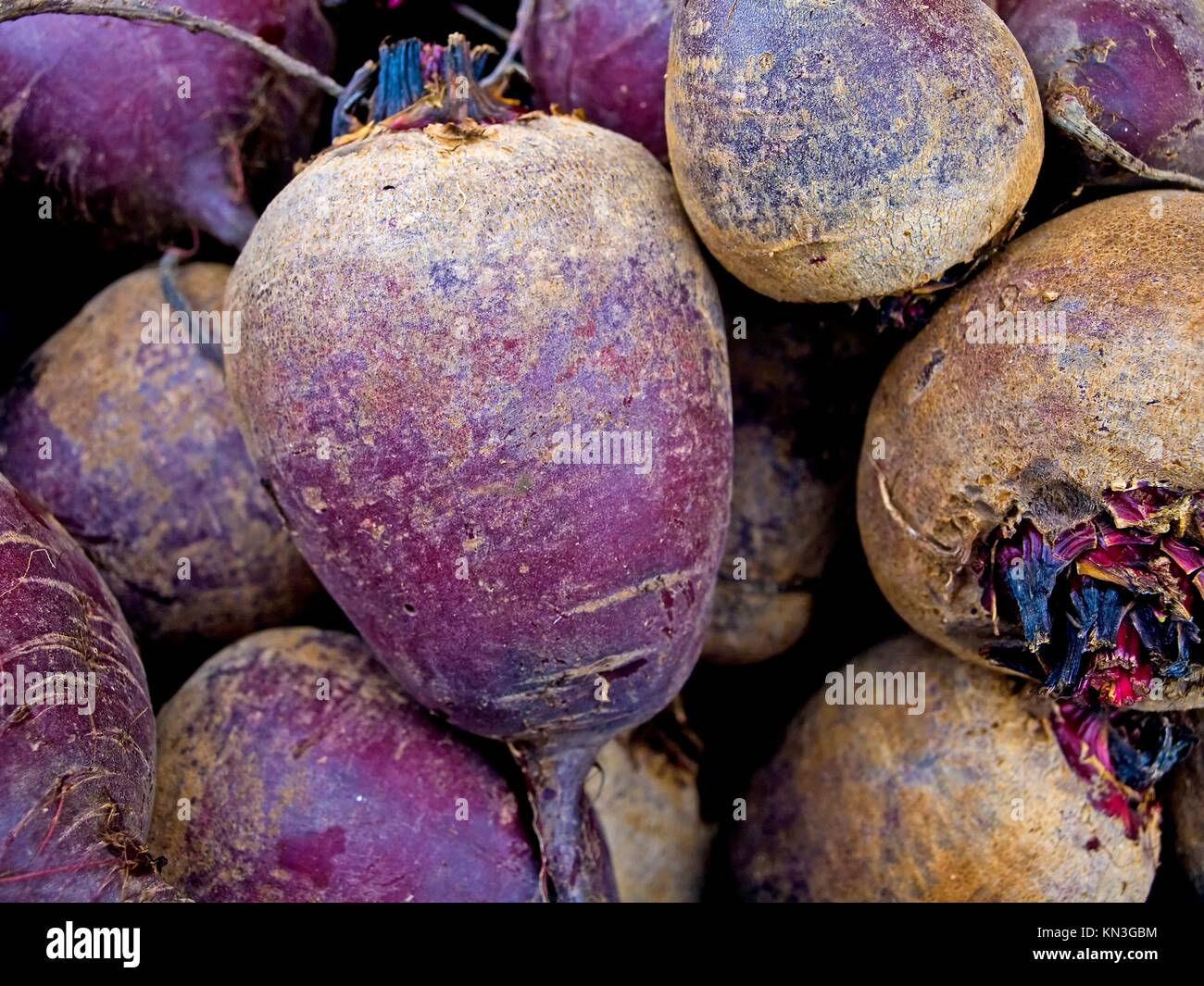 beetroot. - Stock Image