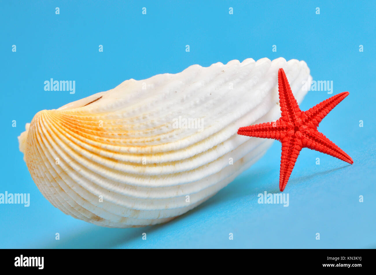 629a4a9c03 seashell and red starfish on blue background