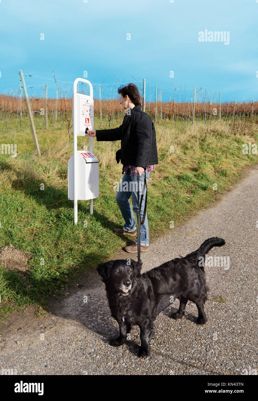 Woman pulls pouch for dog waste in the vineyard. - Stock Image