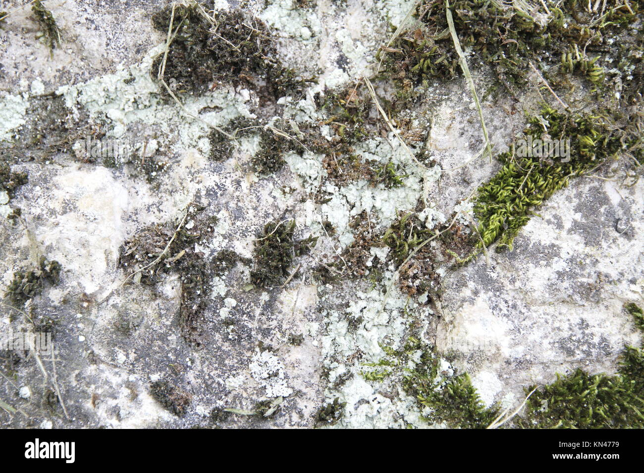 Plants breaking through a rotten and humid stone wall. - Stock Image