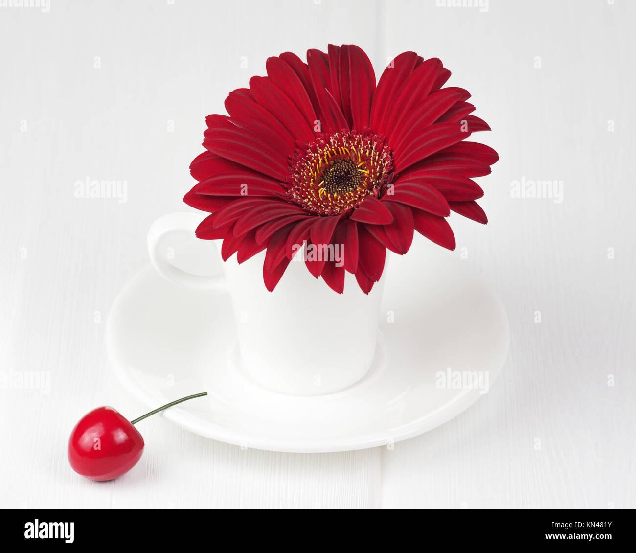 Red gerbera flower in cup and sauce on white wooden background stock red gerbera flower in cup and sauce on white wooden background closeup mightylinksfo
