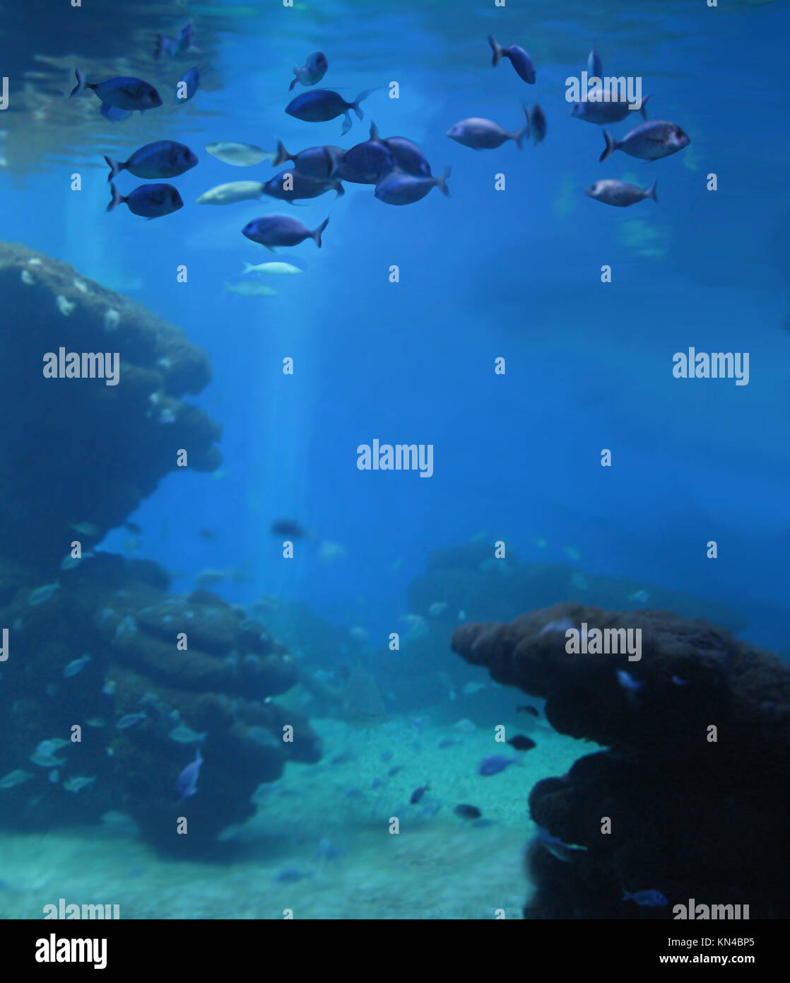 Aquarium with school of fish, digital painting. - Stock Image